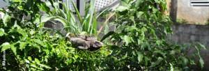 Iguana Watching