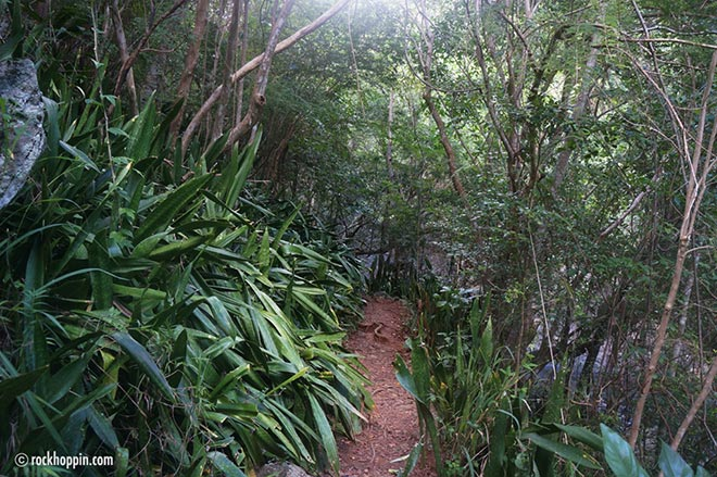 Hiking in Paradise - Virgin Islands National Park